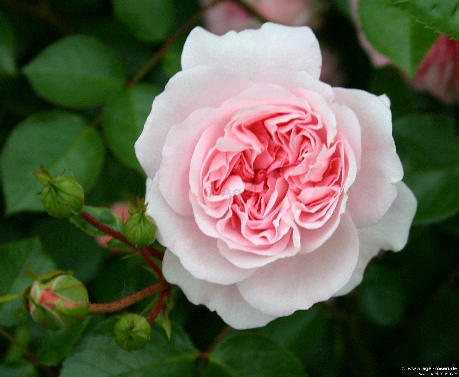Dévouée teen granny square handmade pink reminds