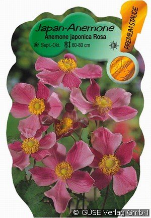 Buy Herbst Anemone Japan Anemone Online At Agel Rosen Anemone
