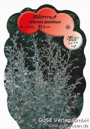 wermut bei agel rosen online kaufen artemisia absinthium stauden f r beete. Black Bedroom Furniture Sets. Home Design Ideas