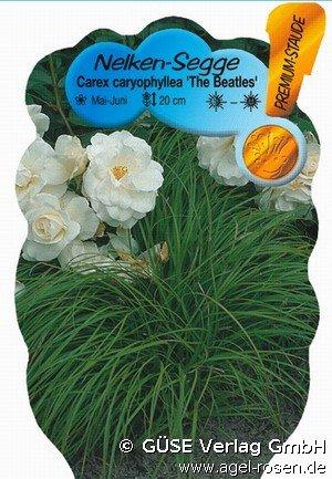 nelken segge bei agel rosen online kaufen carex caryophyllea 39 the beatles 39. Black Bedroom Furniture Sets. Home Design Ideas