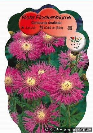 flockenblume bei agel rosen online kaufen centaurea. Black Bedroom Furniture Sets. Home Design Ideas