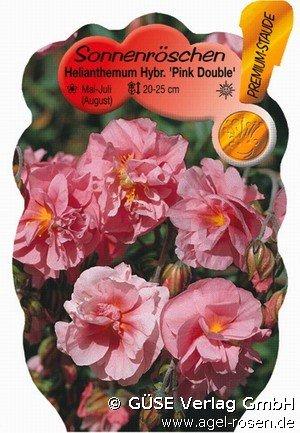 sonnenr schen bei agel rosen online kaufen helianthemum. Black Bedroom Furniture Sets. Home Design Ideas