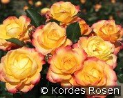Flaming Star (Hybrid Tea)