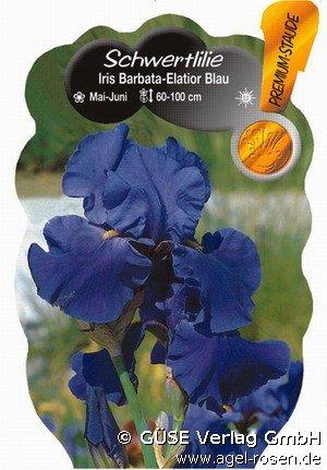 schwertlilie bei agel rosen online kaufen iris barbata elatior hybride blau stauden f r. Black Bedroom Furniture Sets. Home Design Ideas