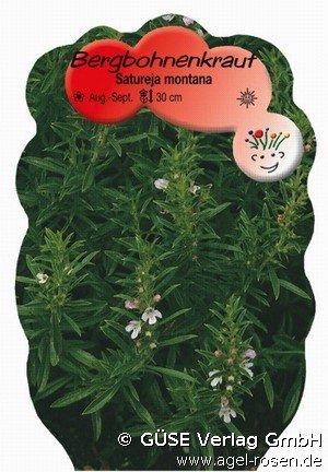buy winter bohnenkraut online at agel rosen satureja montana ssp montana. Black Bedroom Furniture Sets. Home Design Ideas