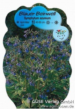 beinwell bei agel rosen online kaufen symphytum azureum. Black Bedroom Furniture Sets. Home Design Ideas