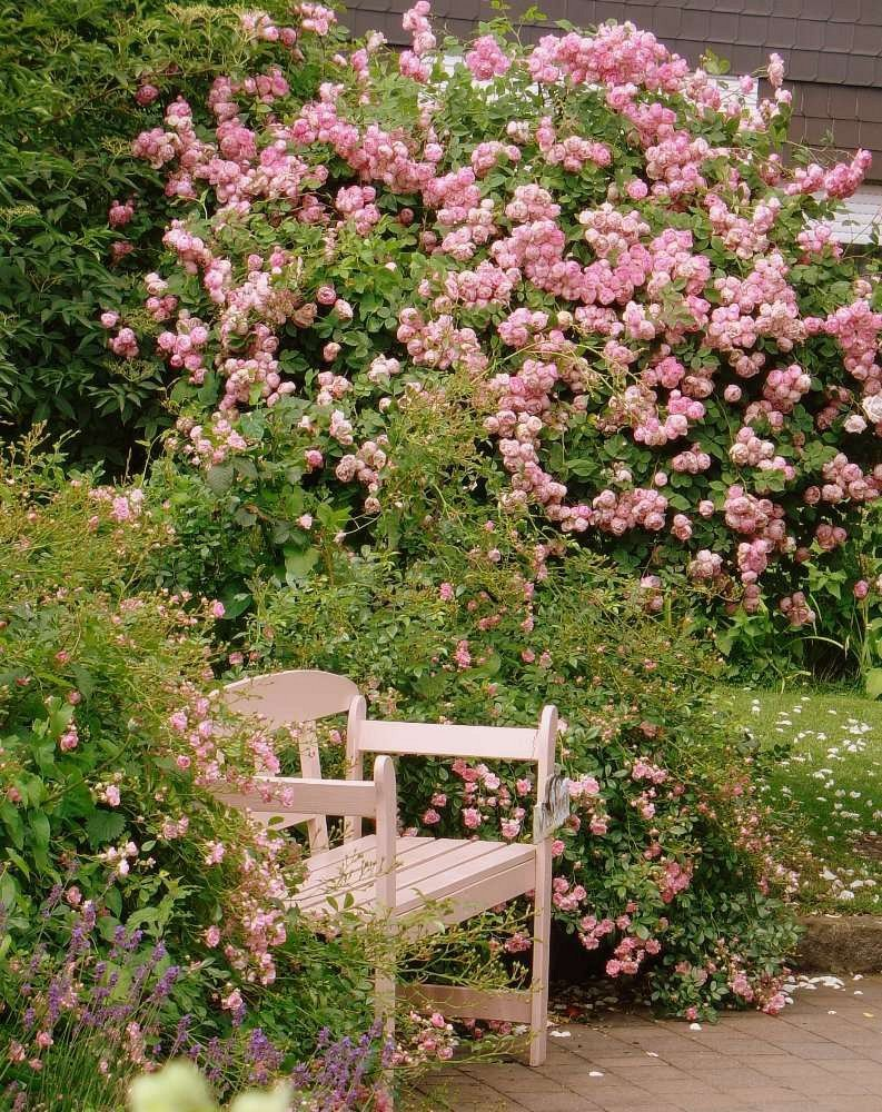 raubritter rambler kaufen bei agel rosen. Black Bedroom Furniture Sets. Home Design Ideas