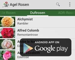 Rosen Kaufen Agel Rosen Online Shop